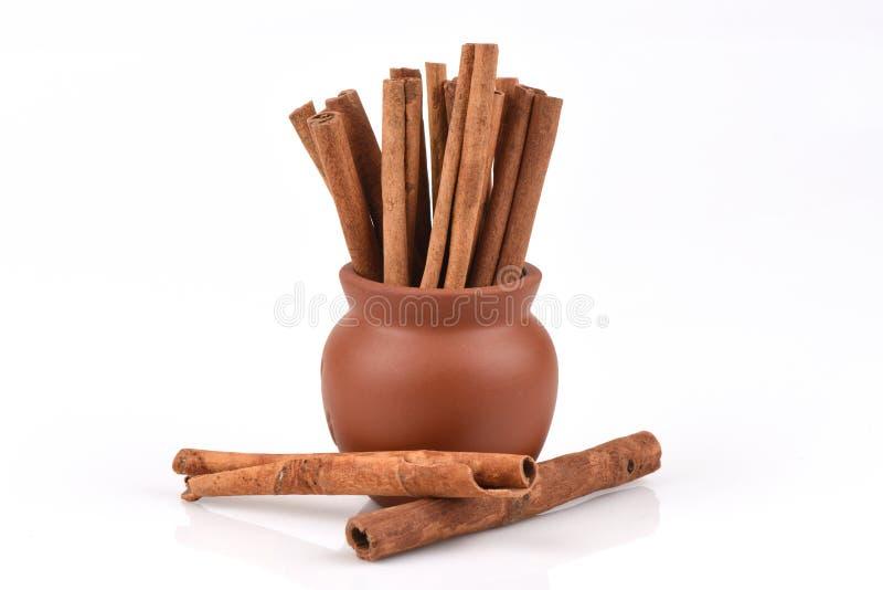 Kaneel, Kassieboom (Cinnamomum soorten ) stock foto