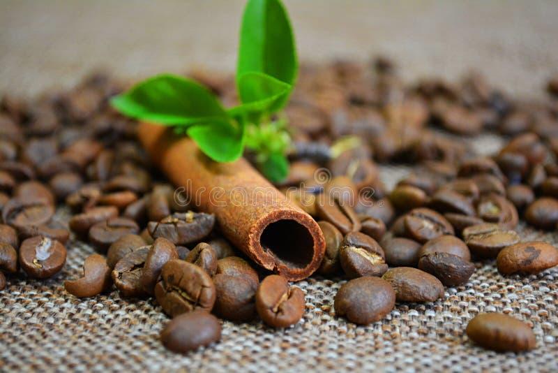 Kaneel, koffiebonen en bloemen stock foto's