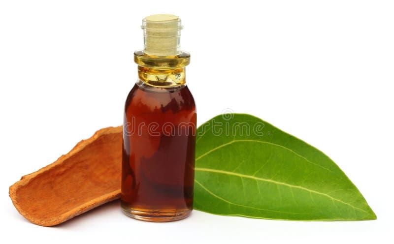 Kanelbrunt blad med skället och nödvändig olja royaltyfri foto