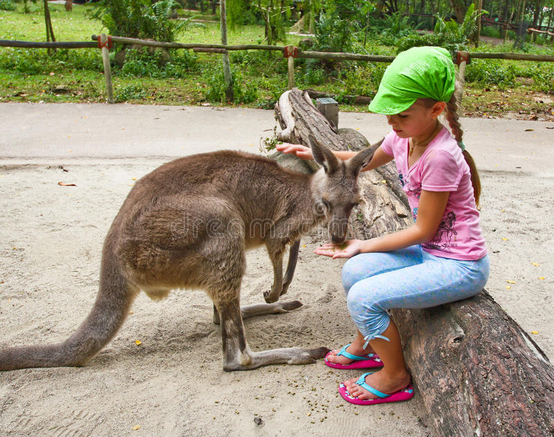 Girl feeding kangaroo. Little girl feeding and taming cute kangaroo in the park