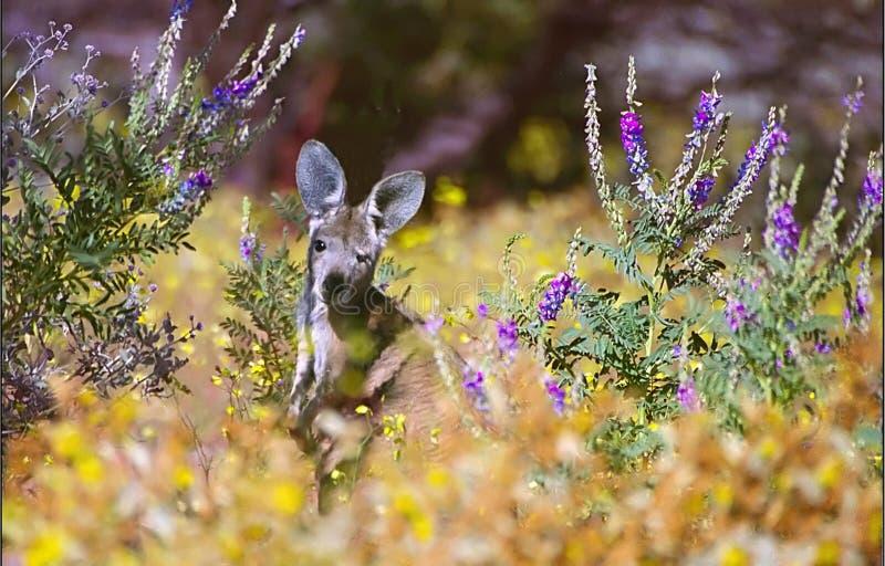 Download Kangaroo stock photo. Image of marsupial, kangaroo, australia - 18056
