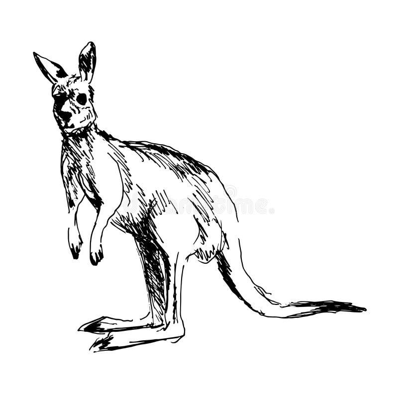 Kangaroo. Hand drawing of a kangaroo royalty free illustration