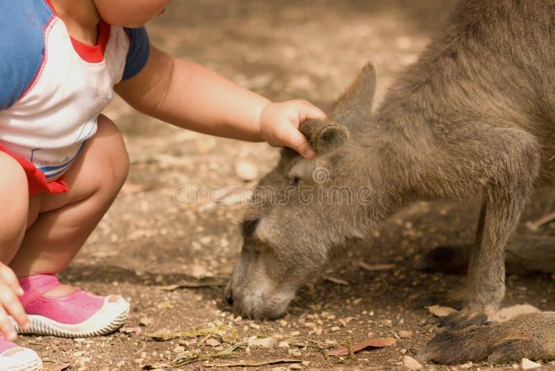 Kangaroo and human child relationship stock image