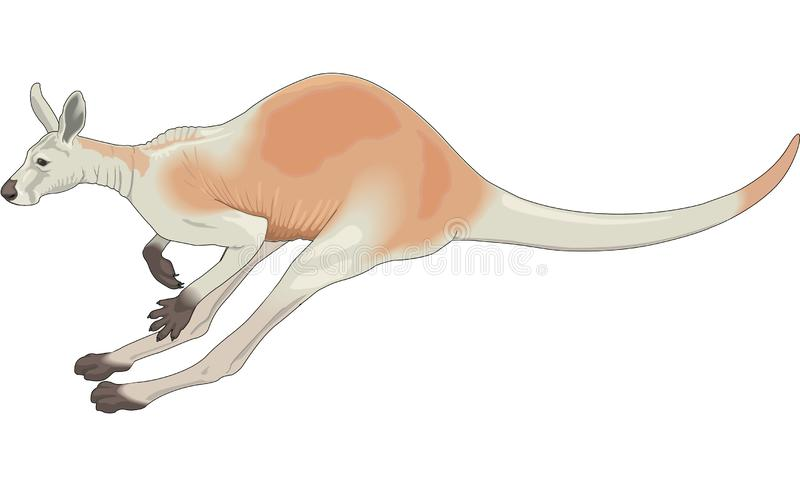 Kangaroo Jumping Illustration stock illustration