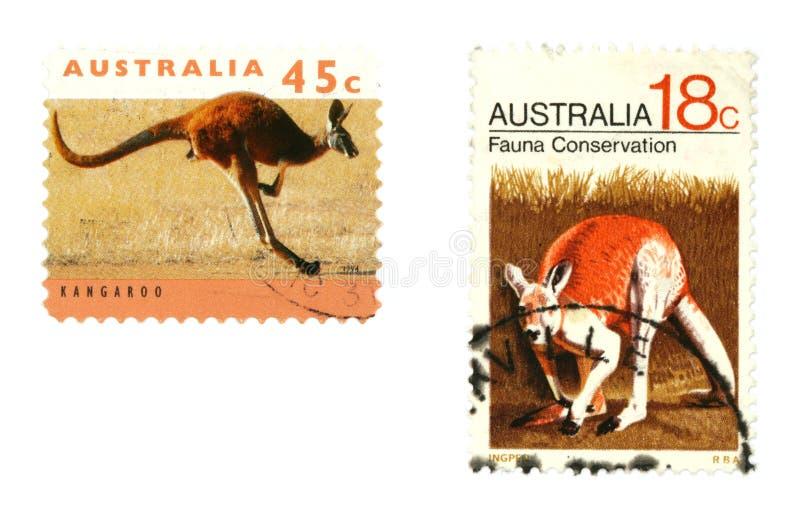 Download Kangaroos stock image. Image of collectibles, communication - 7116771