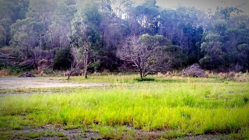 Kangoeroes op een gebied royalty-vrije stock fotografie