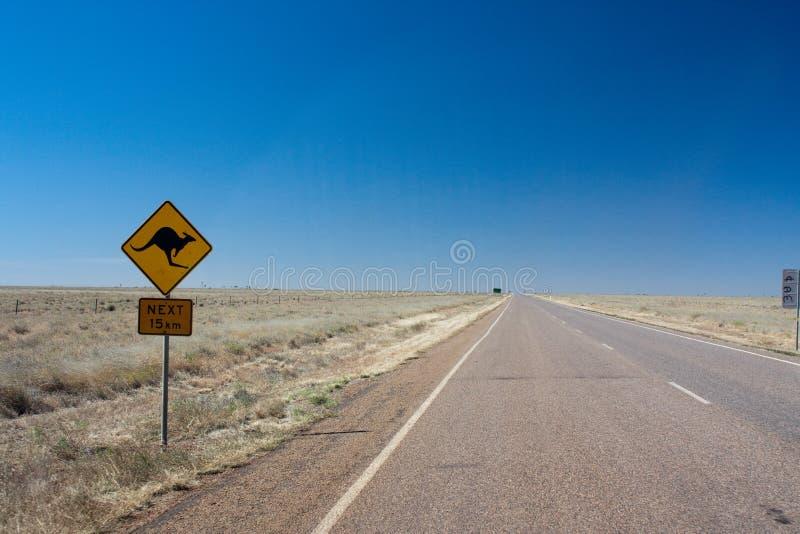 Kangourou à l'intérieur images libres de droits