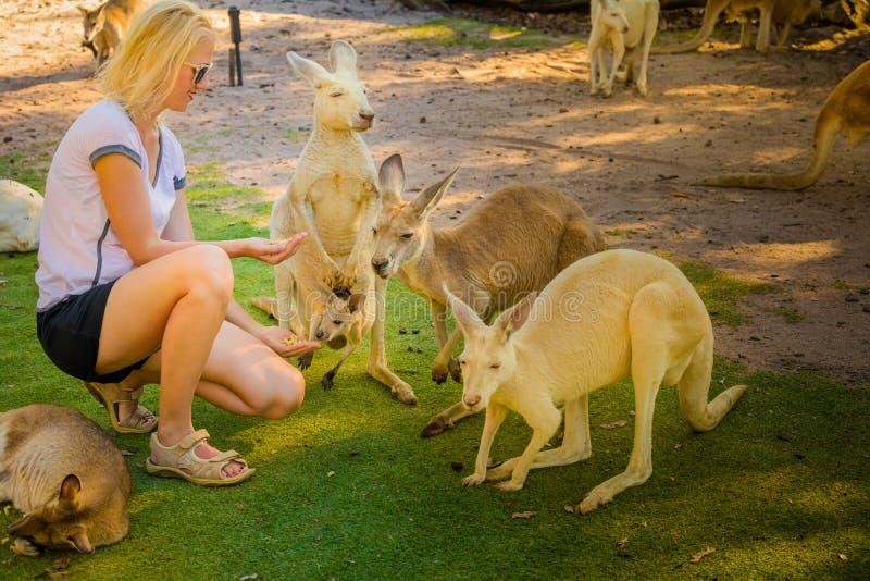 Kangourou avec le joey photos stock