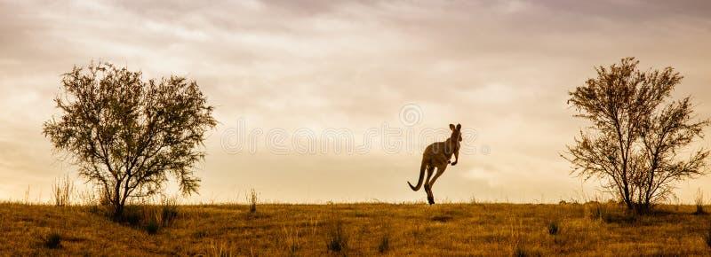 Kangourou et coucher du soleil australien images libres de droits