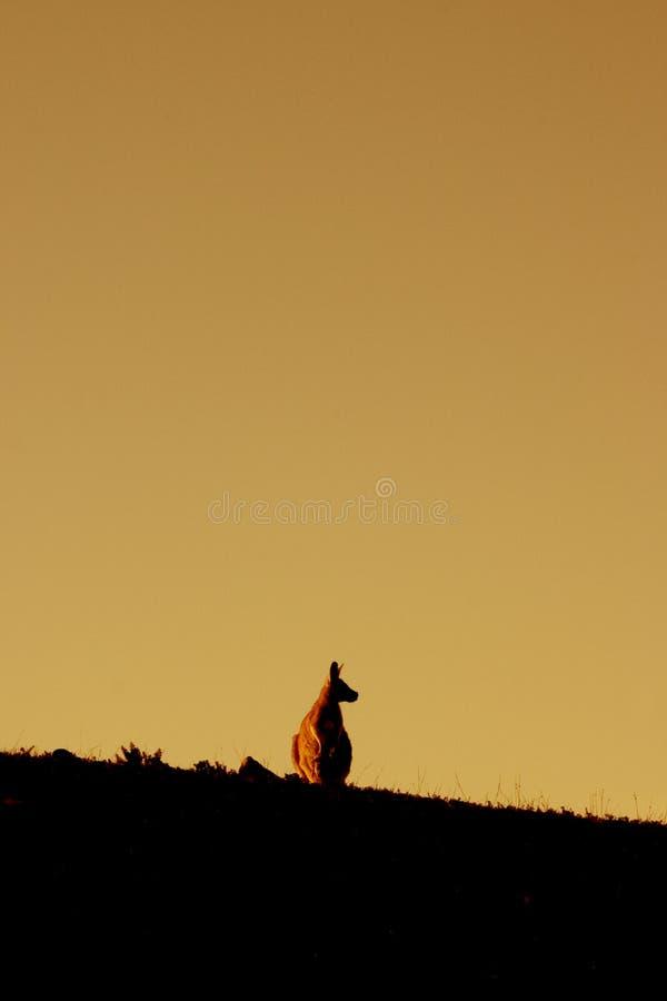 Download Kangur zwierzęcych obraz stock. Obraz złożonej z ssak, sylwetkowy - 139673
