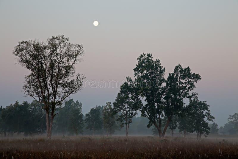 Kanha Nationaal Park - India royalty-vrije stock foto's