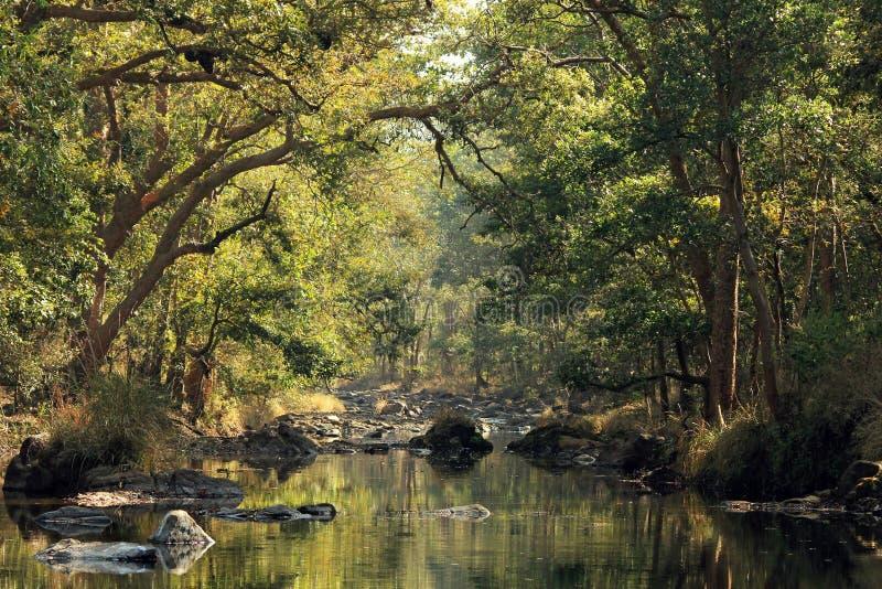 Kanha nationalpark royaltyfri fotografi