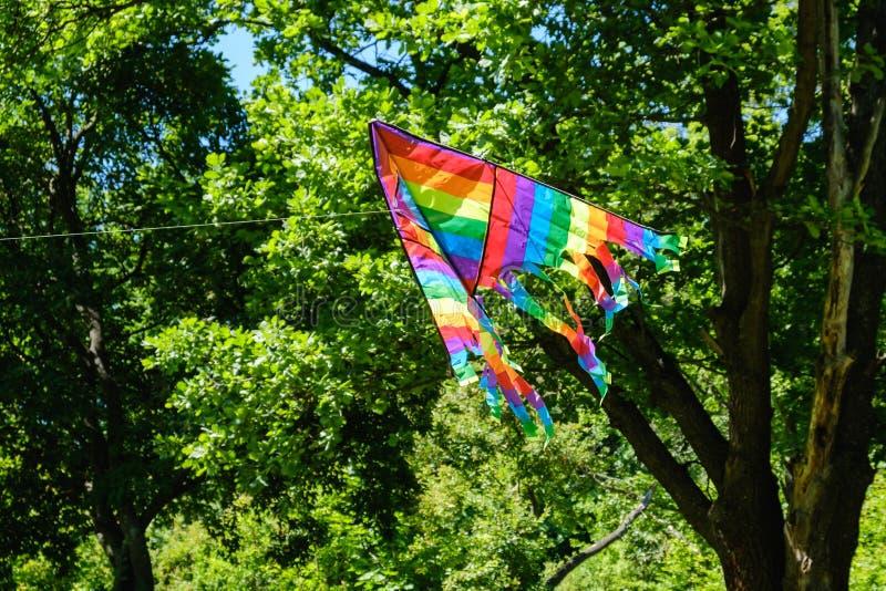 Kani latanie przeciw drzewo zieleni lata tłu, bielu wiatr obraz royalty free