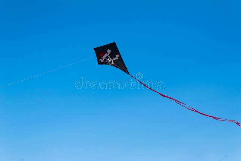 Kani latanie w powietrzu przeciw jasnemu niebieskiemu niebu obraz royalty free
