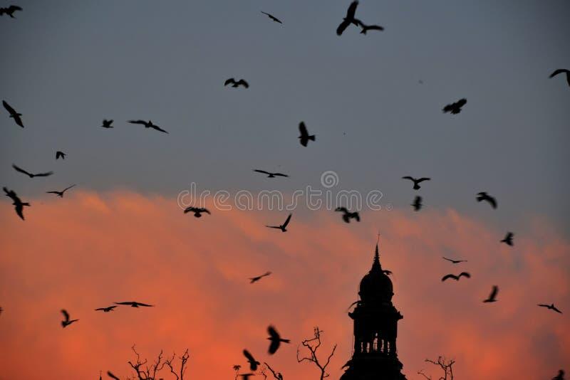 Kania ptaków zbierać fotografia stock