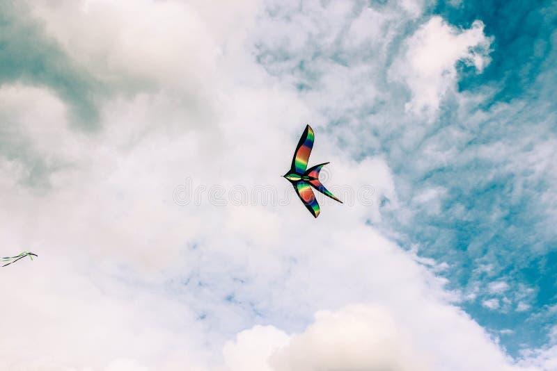 Kania w chmurnym niebie, lato festiwal fotografia royalty free