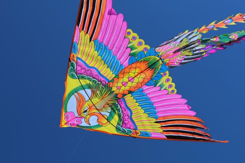 Kania z ptakiem w rosyjskim niebie obrazy stock