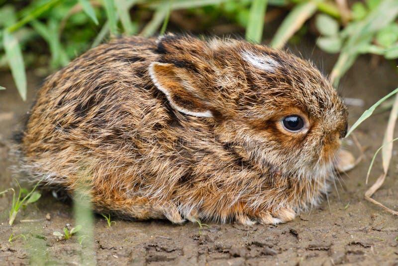 Kanin behandla som ett barn kaninen royaltyfri fotografi