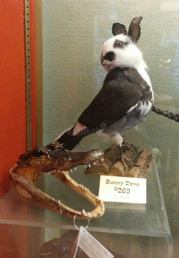 Kanin dykt bisarrt uppstoppning- och alligatorhuvud royaltyfri bild