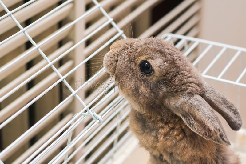Kanin i en bur royaltyfri fotografi