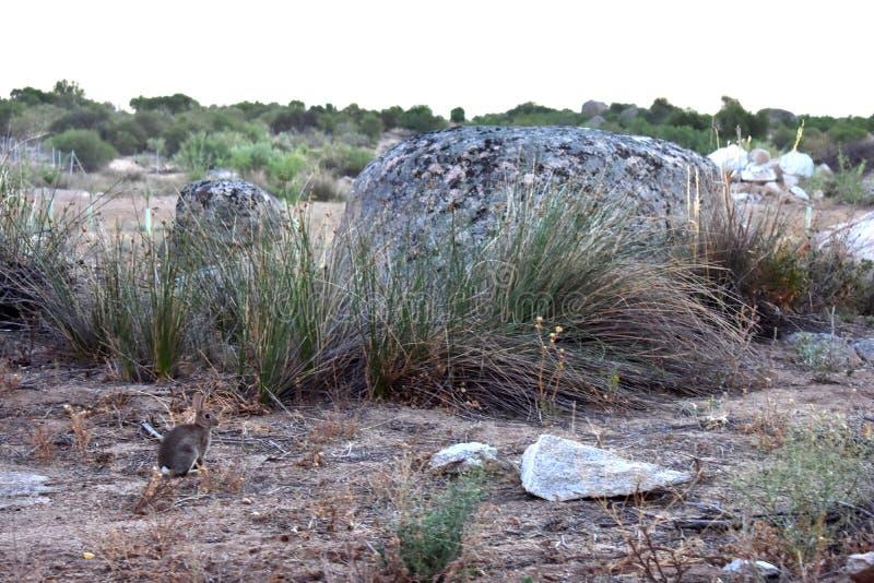kanin i fältet royaltyfri foto