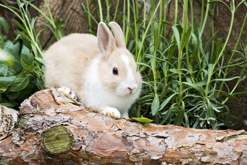 Kanin i trädgården arkivbilder