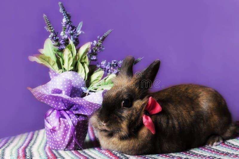 Kanin med blommor arkivfoto