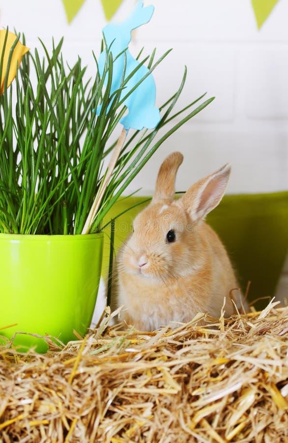 Kanin nära gräset arkivbilder