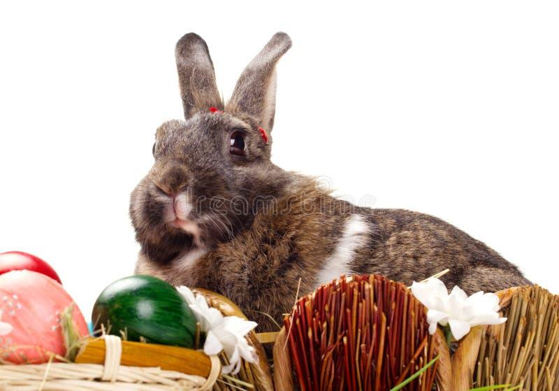 Kanin och easter ägg fotografering för bildbyråer
