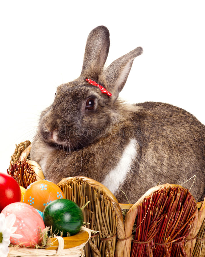 Kanin och easter ägg arkivfoton