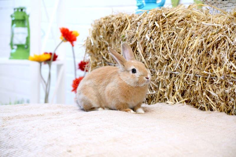 Kanin på en höbunt med blommor fotografering för bildbyråer