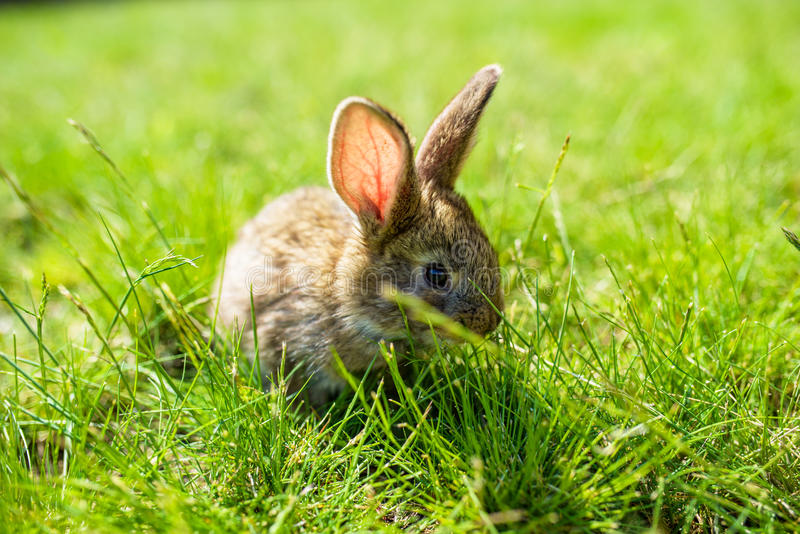 Kanin på gräset royaltyfria foton