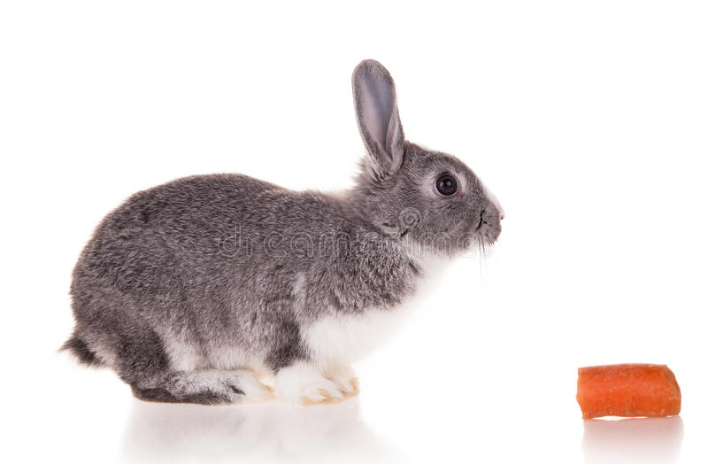 Download Kanin på vit bakgrund arkivfoto. Bild av morot, husdjur - 37346466