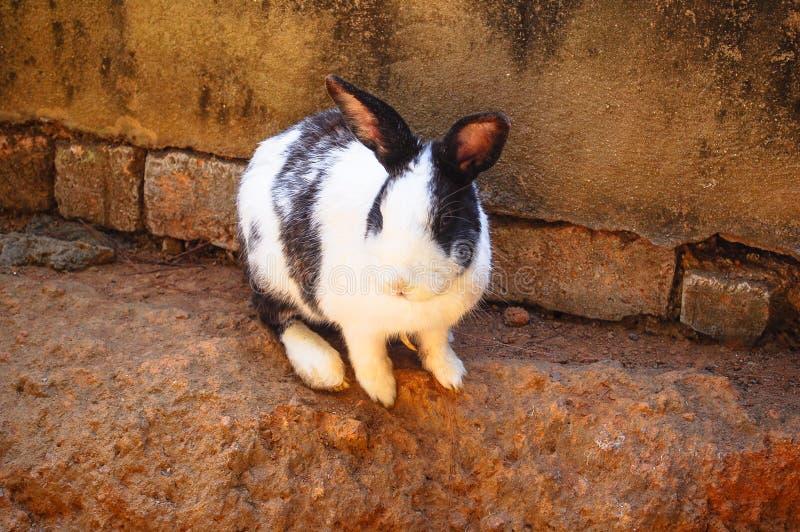Kanin som är utomhus- nära väggen royaltyfri bild
