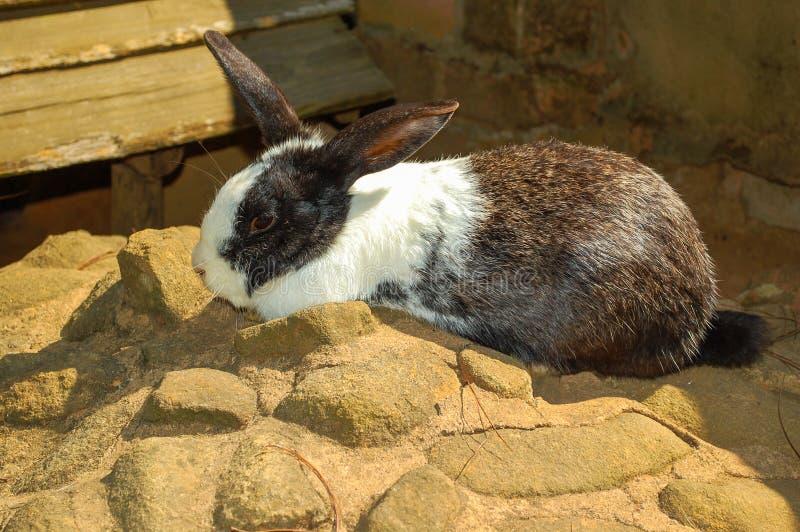 Kanin som är utomhus- nära väggen arkivbild