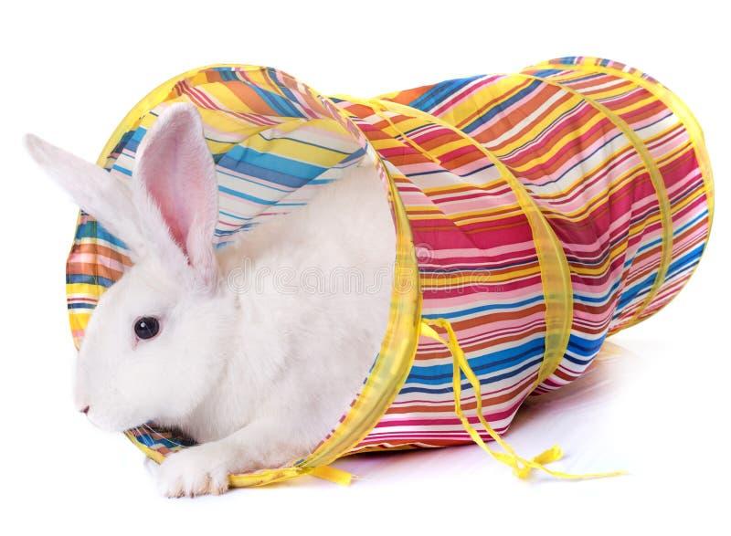 Kanin som spelar i tunnel arkivbild