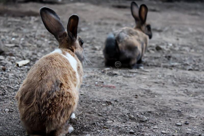 Kanin två arkivfoton