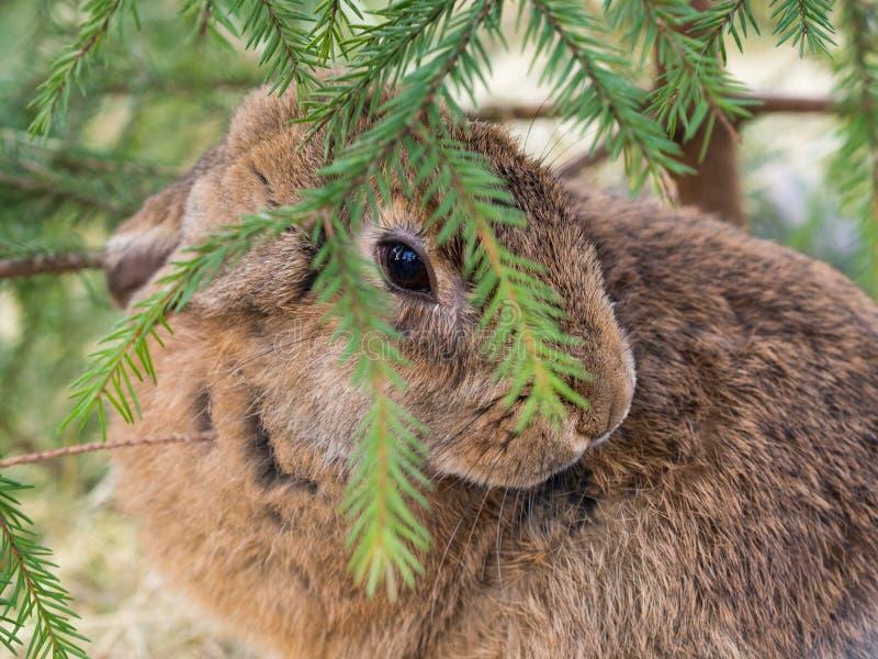 Kanin under trädet arkivbild