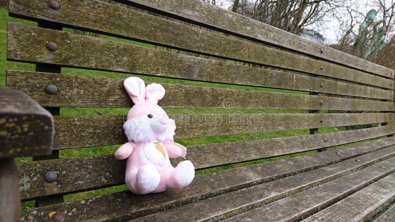 Kanin väntar på dig att sitta därefter arkivbild