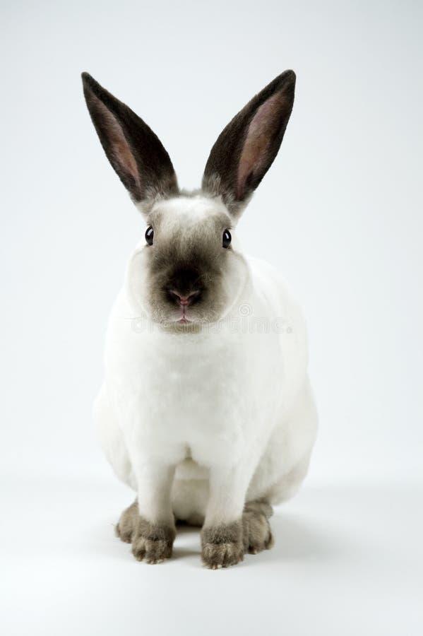 kaninbeslutstid arkivbild