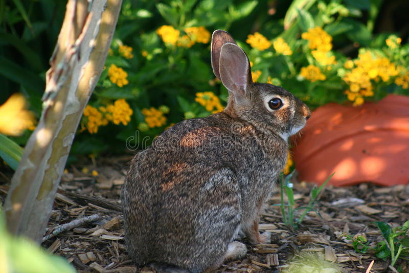 Kaninchen 2 lizenzfreies stockbild