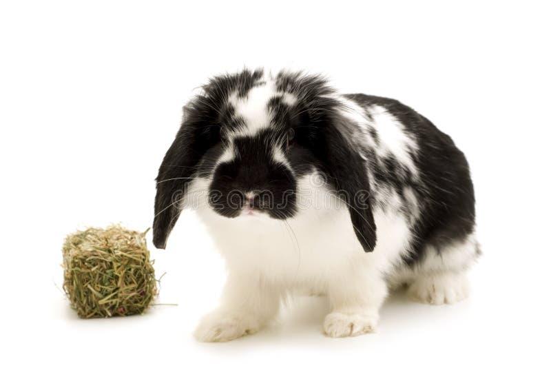 Kaninchen stockbilder