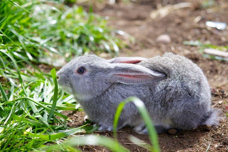 Kaninchen lizenzfreie stockfotografie