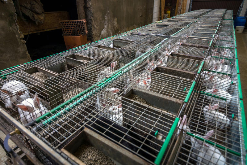 Kaninchen auf dem Bauernhof stockfoto