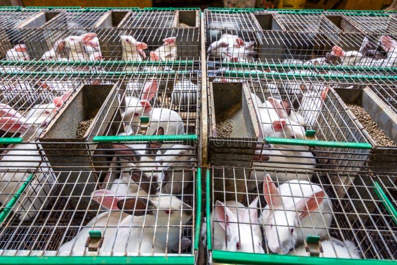Kaninchen auf dem Bauernhof lizenzfreies stockfoto