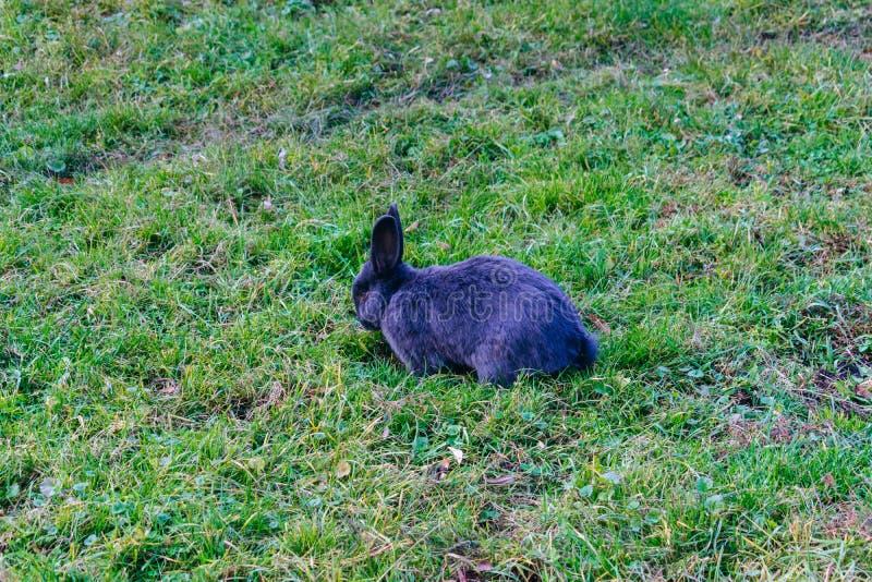 Kaninchen auf dem grünen Gras lizenzfreie stockbilder