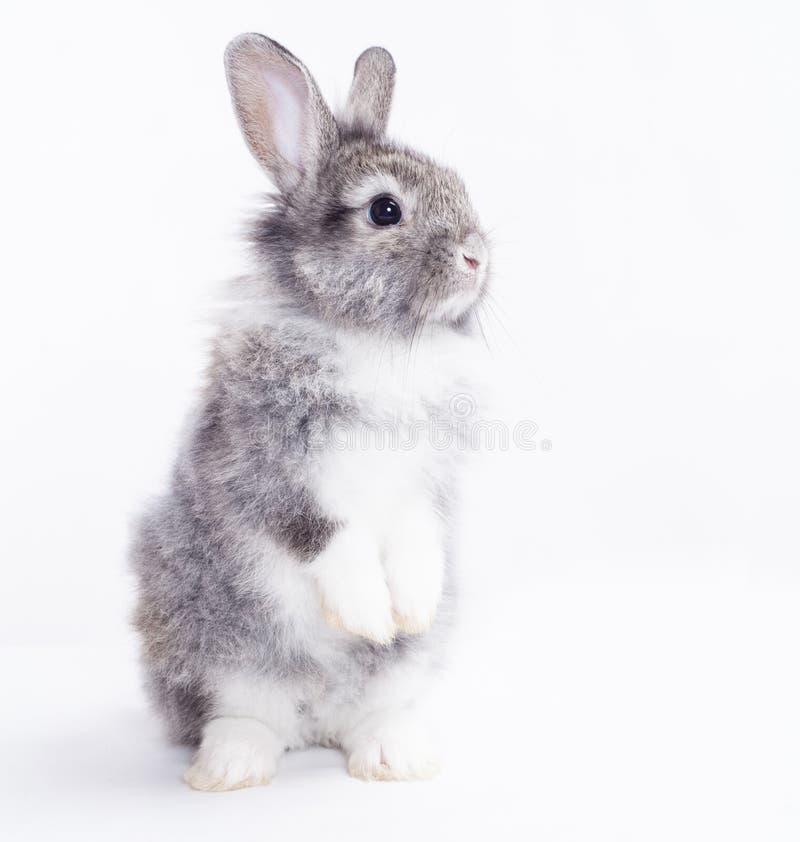 Kaninchen auf einem weißen Hintergrund. lizenzfreie stockbilder