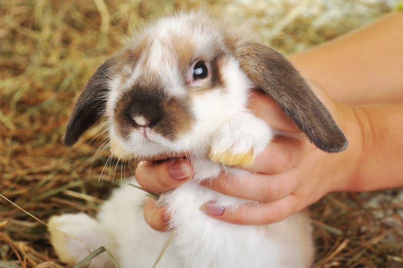 Kaninchen auf Heu stockbilder