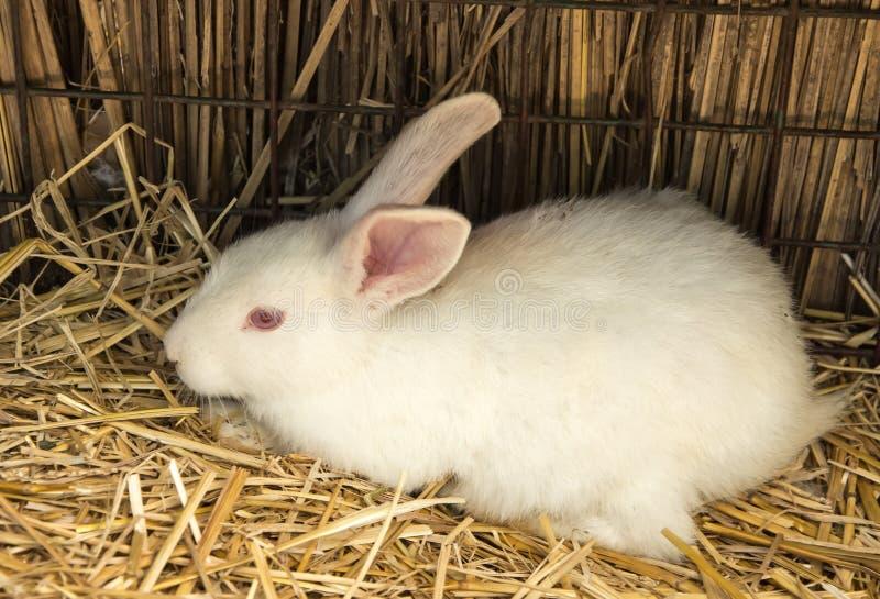 Kaninchen auf Stroh des trockenen Grases lizenzfreie stockbilder