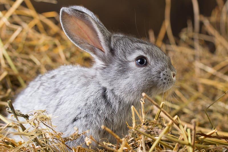 Kaninchen auf trockenem Gras lizenzfreie stockbilder